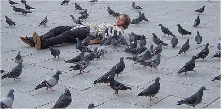 Pigeons de venise - Faire fuir les pigeons ...