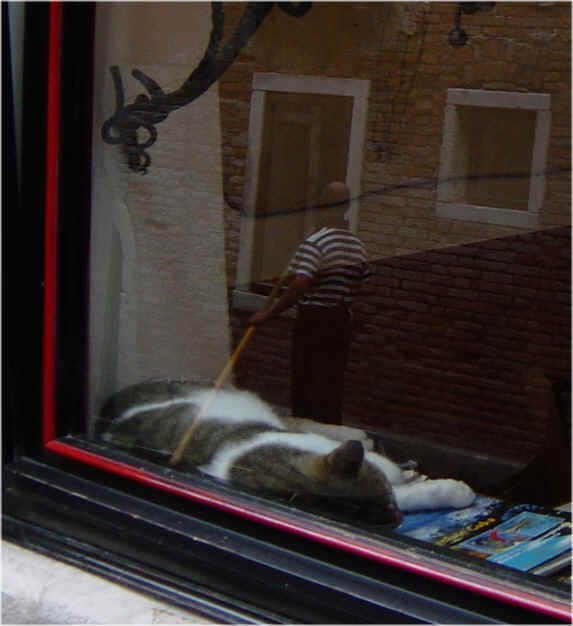 chat dormant (venise)